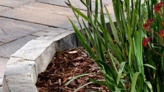 Anglia Edger Beauty 1