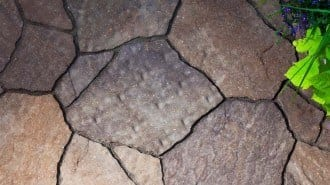 Mega Arbel Beauty 3