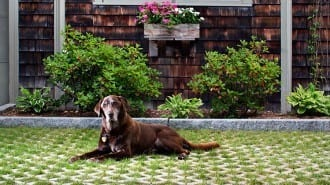 Turfstone Beauty 1