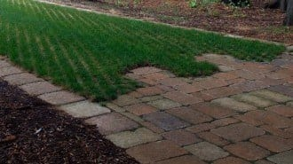 Turfstone Beauty 2